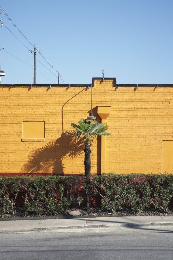Palmera y seto al lado de una pared amarilla imagenes de archivo