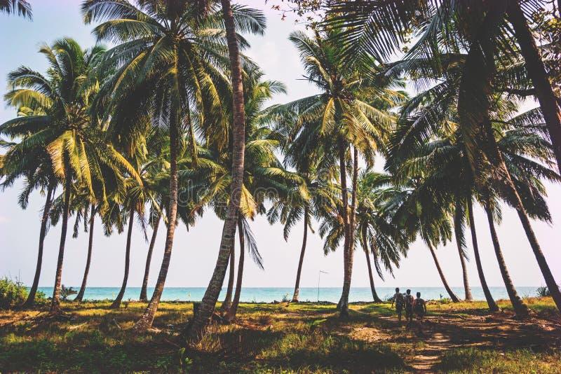 palmeraie sur le rivage de l'Océan Indien photos libres de droits