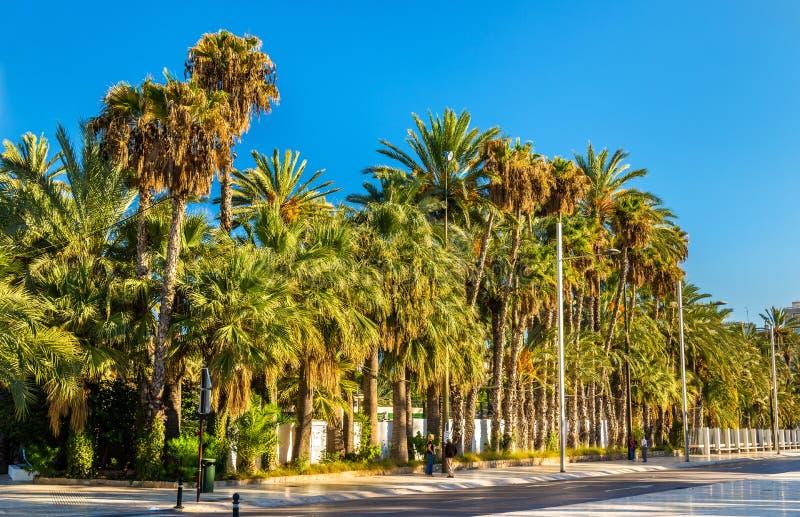 Palmeral Elche, Hiszpania Unesco dziedzictwa miejsce zdjęcie stock