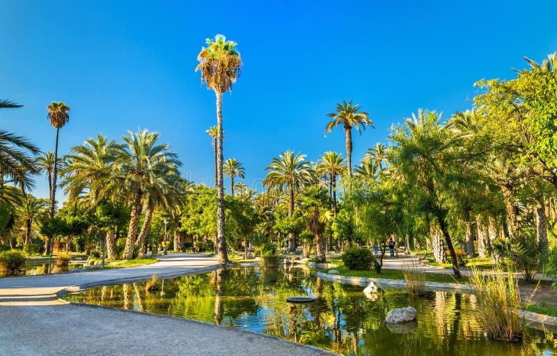 Palmeral Elche, Hiszpania Unesco dziedzictwa miejsce obrazy royalty free