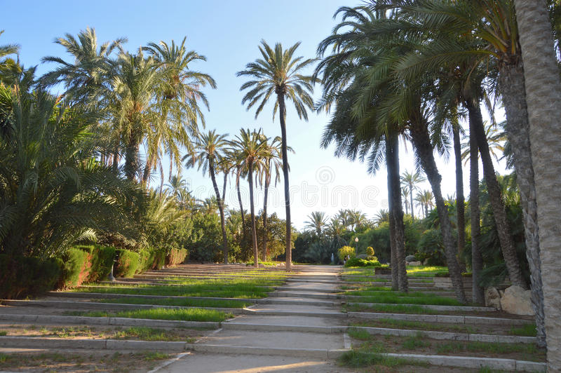 Palmeral Park Alicante - Palm Trees In Tropical Setting stock photos