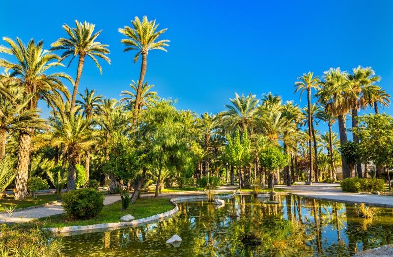 Palmeral van Elche, Spanje De erfenisplaats van Unesco royalty-vrije stock foto's