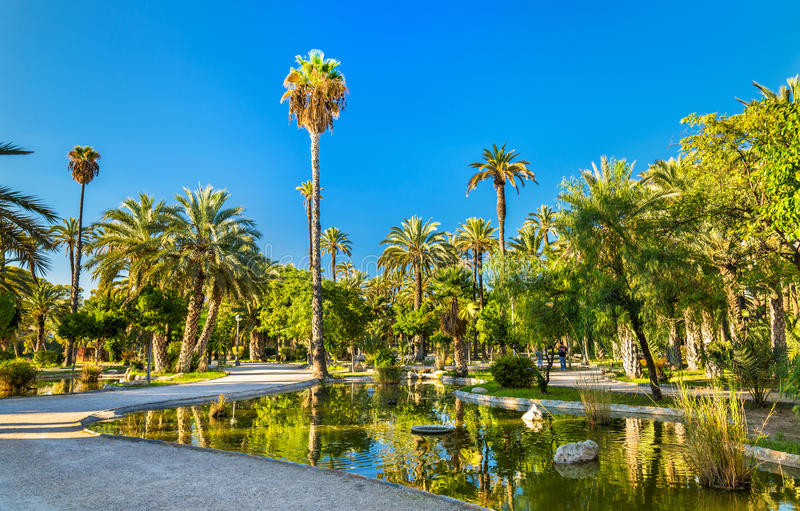 Palmeral van Elche, Spanje De erfenisplaats van Unesco royalty-vrije stock afbeeldingen