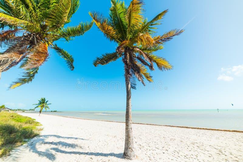 Palmeras blancas de la arena y del coco en la playa de Smathers en Key West imagenes de archivo