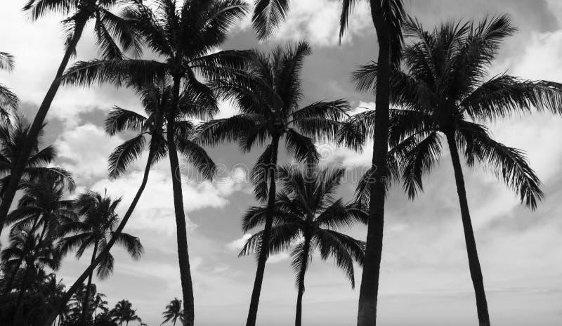 Palmeras blancos y negros con las nubes de tormenta imagen de archivo libre de regalías