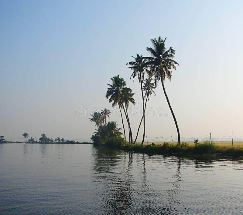 Palmeras con los troncos curvados a lo largo del canal del remanso, Kerala, la India fotografía de archivo libre de regalías
