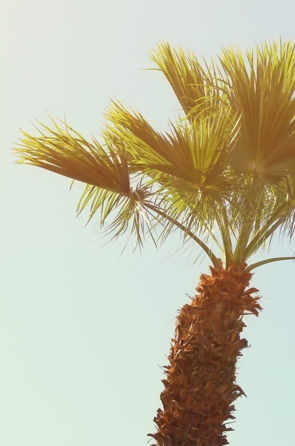 Palmeras contra el cielo Imagen retra del estilo viaje, verano, vacaciones y concepto tropical de la playa imagen de archivo libre de regalías
