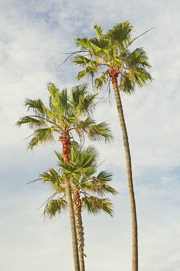 Palmeras de California fotografía de archivo libre de regalías