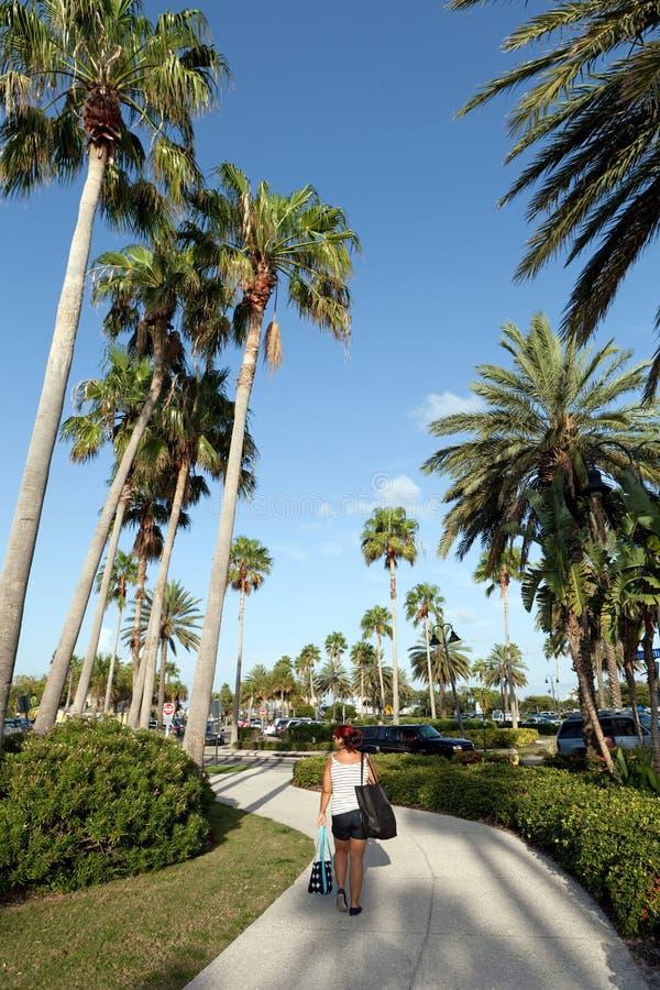 Palmeras de Clearwater la Florida foto de archivo