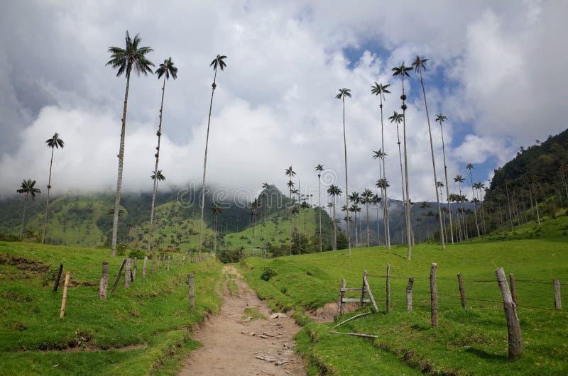 Palmeras de la cera en el valle de Cocora fotografía de archivo libre de regalías