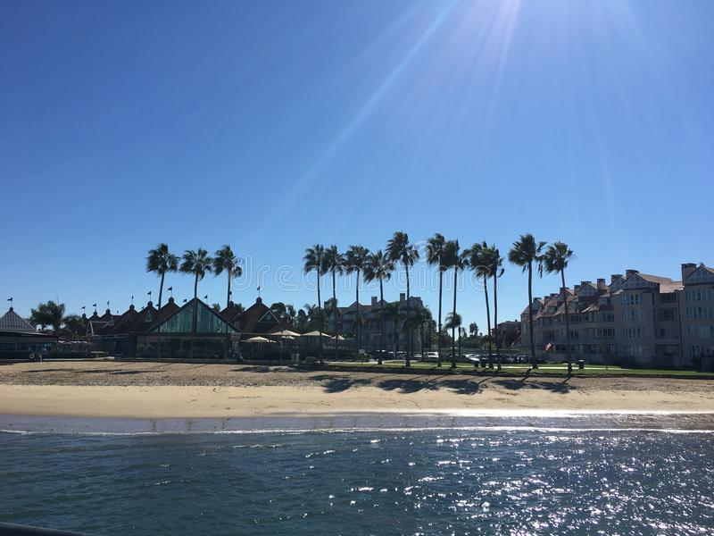 Palmeras de la playa de Coronado foto de archivo libre de regalías