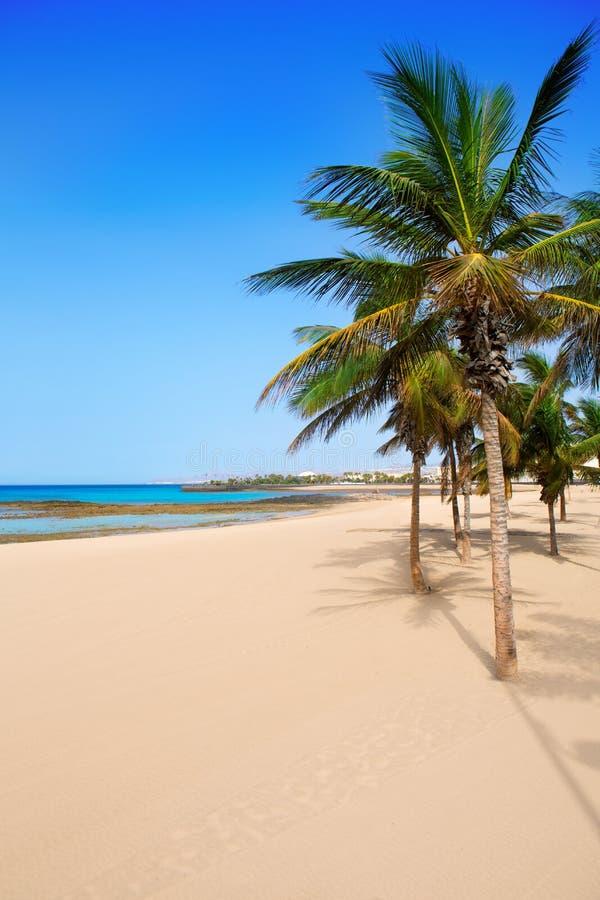 Palmeras De La Playa De Arrecife Lanzarote Playa Reducto Imagen de archivo libre de regalías