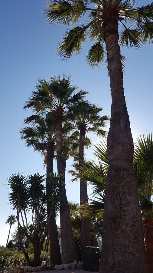 Palmeras de Mónaco imagen de archivo
