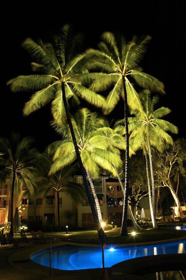 Palmeras del centro turístico en la noche imagenes de archivo
