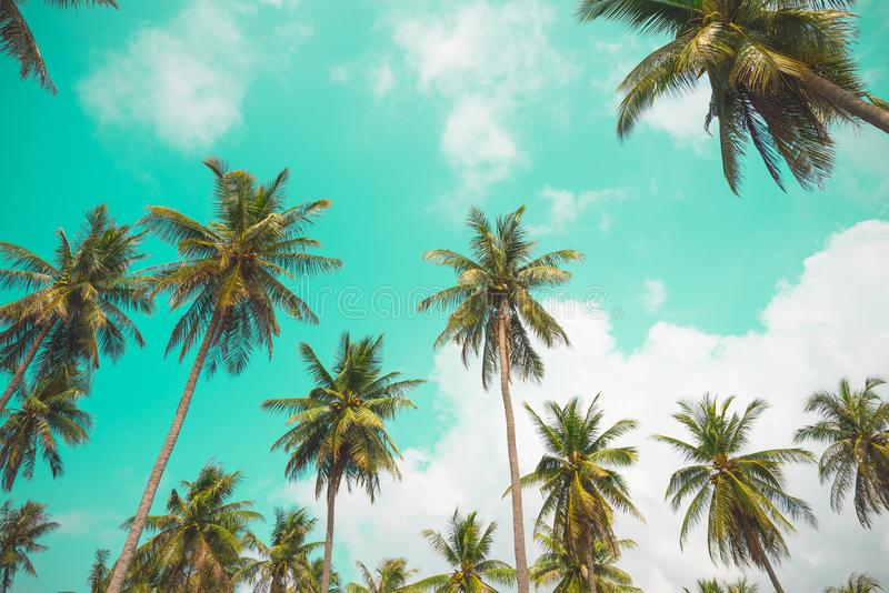 Palmeras del coco - día de fiesta tropical de la brisa del verano, tonelada del vintage fotografía de archivo libre de regalías