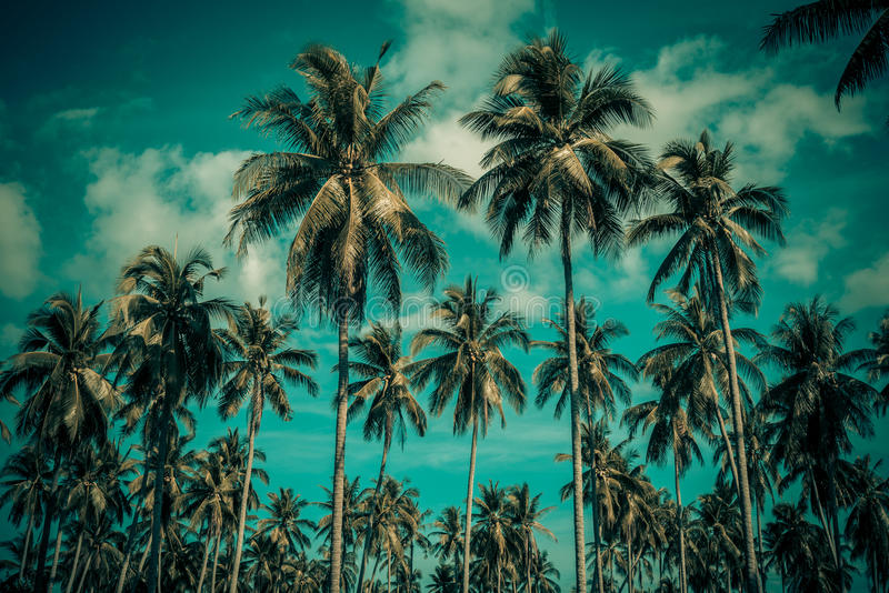 Palmeras del coco de la silueta en la playa imágenes de archivo libres de regalías