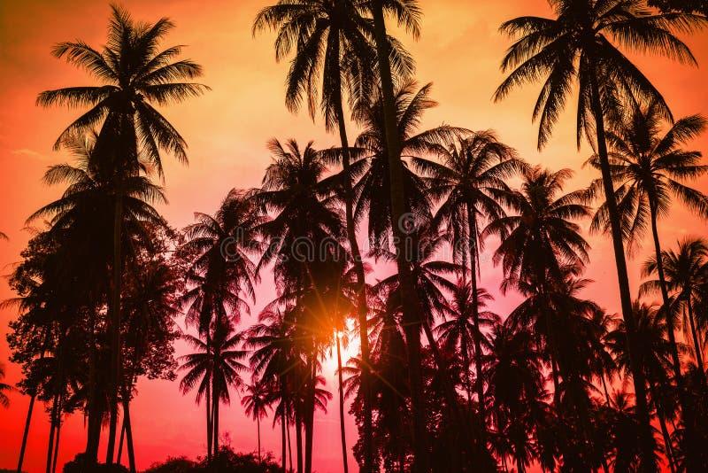 Palmeras del coco de la silueta en la playa en la puesta del sol foto de archivo