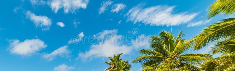 Palmeras del coco debajo de un cielo azul foto de archivo libre de regalías