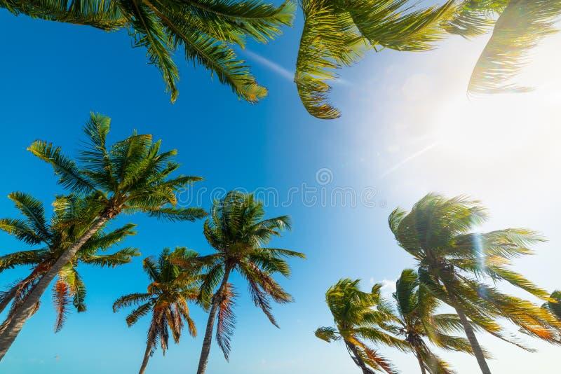 Palmeras del coco debajo de un sol brillante en Key West fotos de archivo libres de regalías