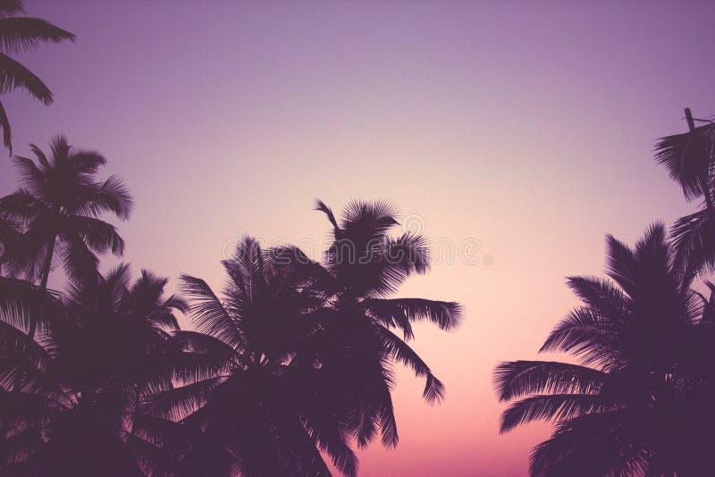 Palmeras del coco en el filtro del vintage de la salida del sol fotos de archivo