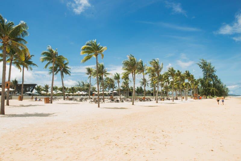 Palmeras del coco en la playa tropical arenosa blanca Silla de cubierta en la playa en Brighton imagen de archivo