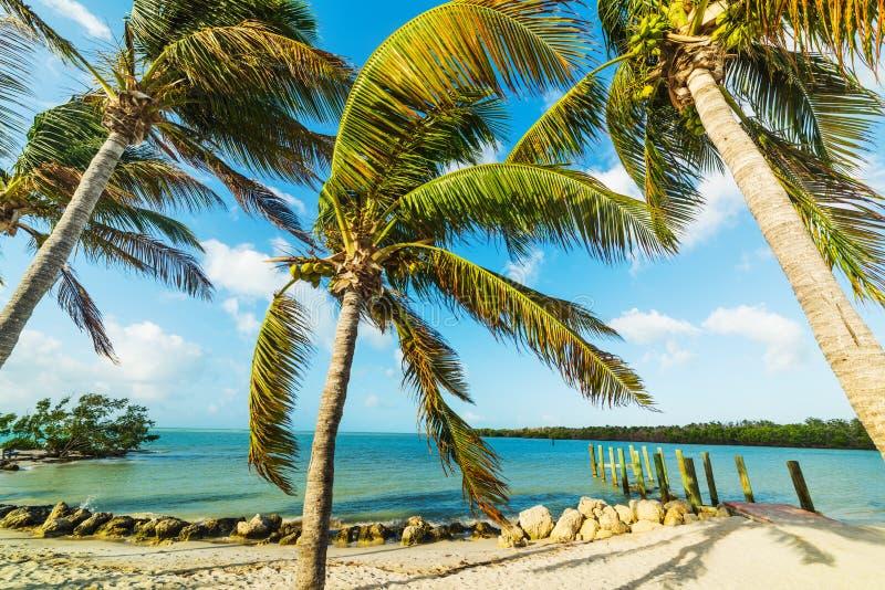 Palmeras del coco en playa famosa del sombrero fotografía de archivo
