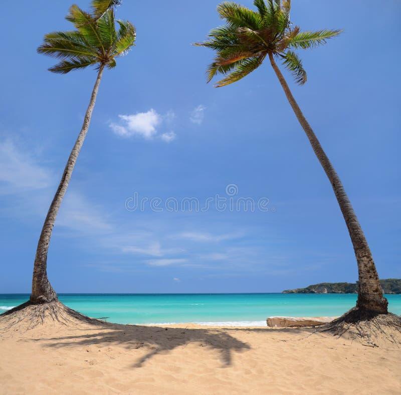 Palmeras del coco en una isla tropical fotos de archivo