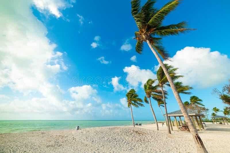 Palmeras del coco y arena blanca en playa del sombrero en las llaves de la Florida imagenes de archivo