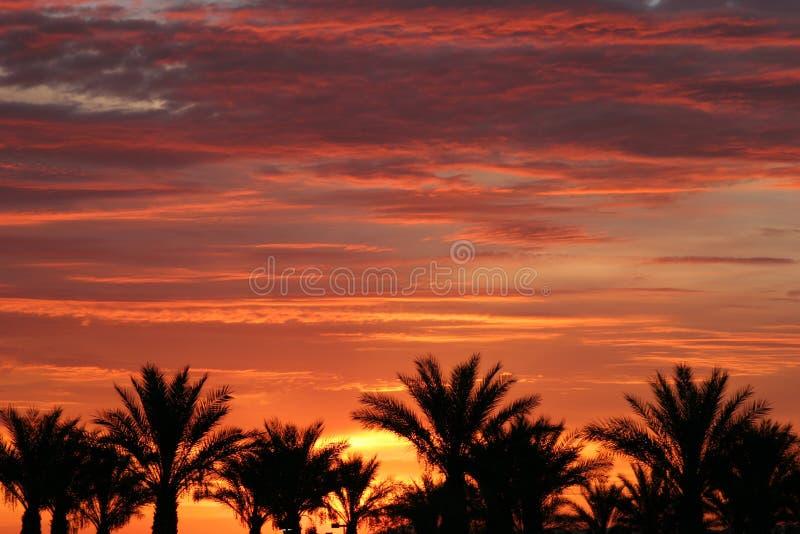 Palmeras durante la salida del sol de Las Vegas imagen de archivo