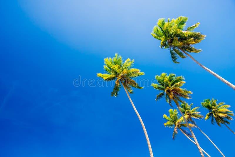 Palmeras en el cielo azul claro del verano fotografía de archivo libre de regalías