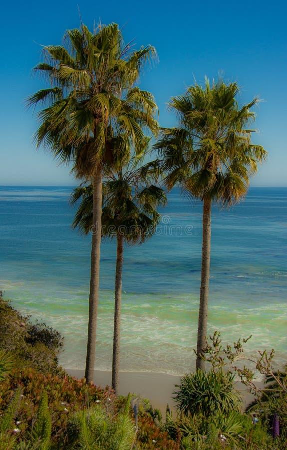 Palmeras en el Laguna Beach, California imagen de archivo