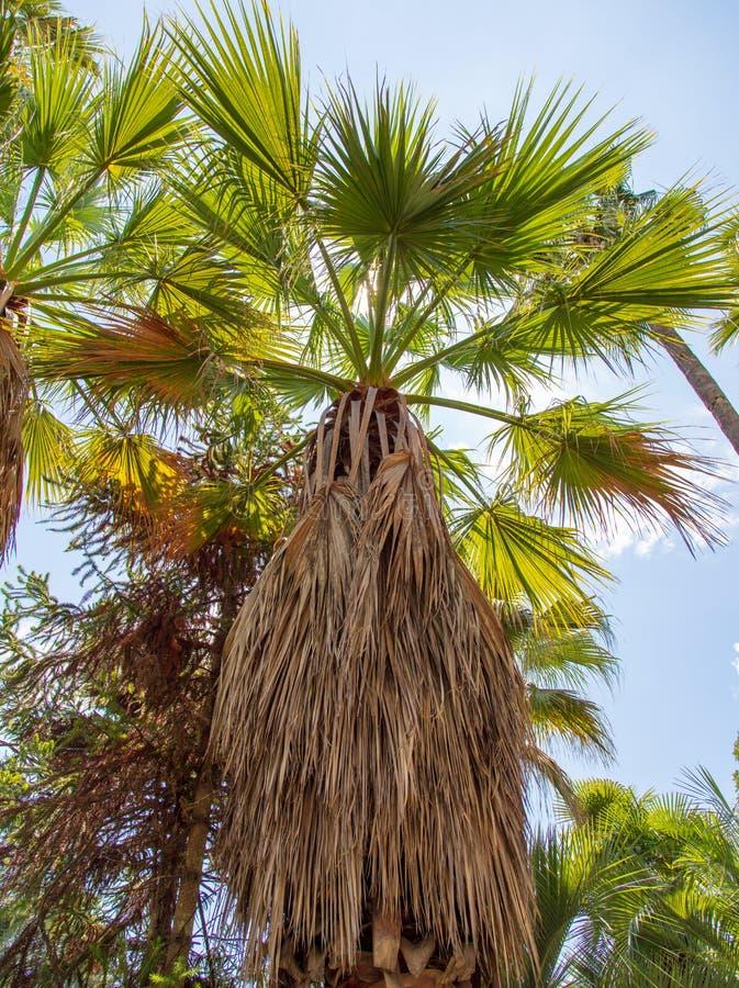 Palmeras en el parque Clima subtropical foto de archivo libre de regalías
