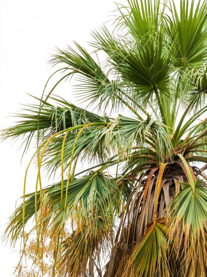 Palmeras en el parque Clima subtropical imagen de archivo libre de regalías