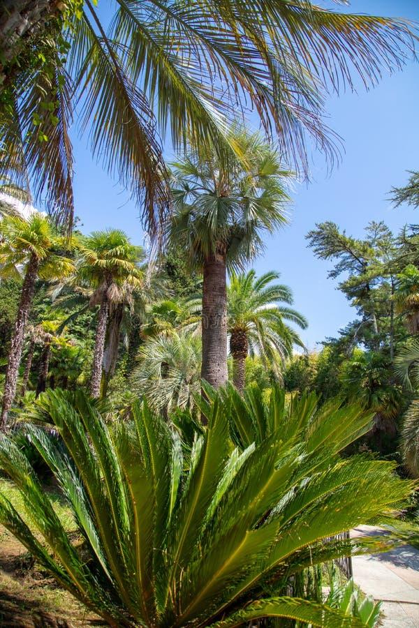 Palmeras en el parque Clima subtropical fotos de archivo libres de regalías