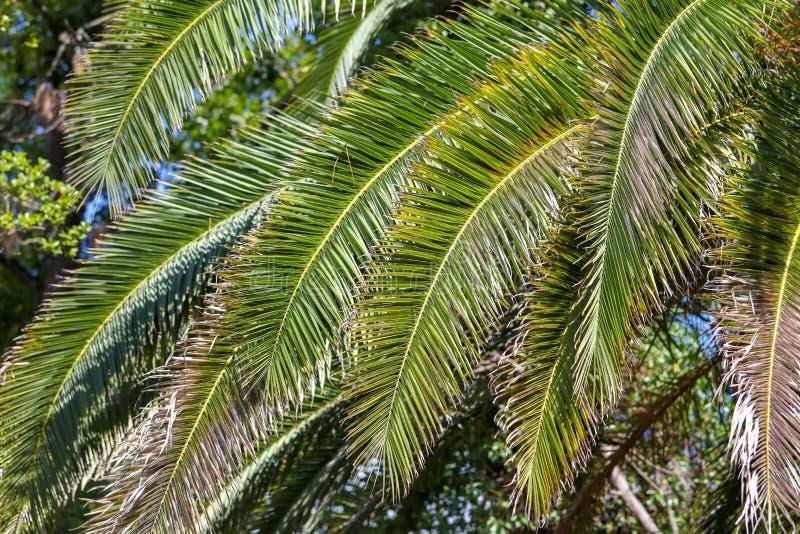 Palmeras en el parque Clima subtropical imágenes de archivo libres de regalías