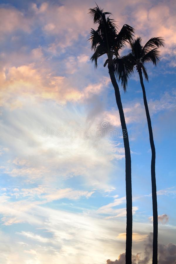 Palmeras en fondo del cielo azul, ramas en fondo del cielo, siluetas de la palma de las palmeras, árboles de palmas de las corona imágenes de archivo libres de regalías