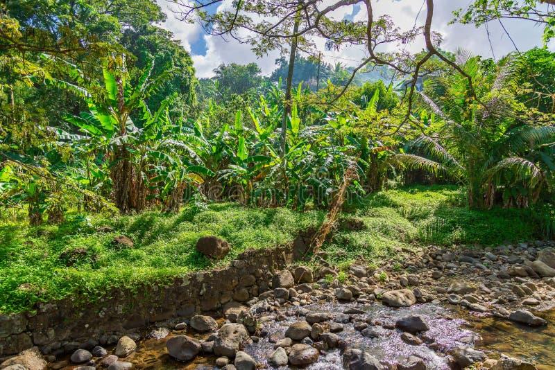 Palmeras en Grenada, del Caribe fotos de archivo libres de regalías