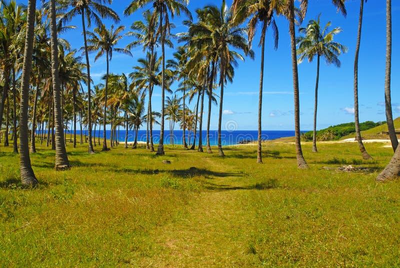 Palmeras en la costa, South Pacific imagenes de archivo