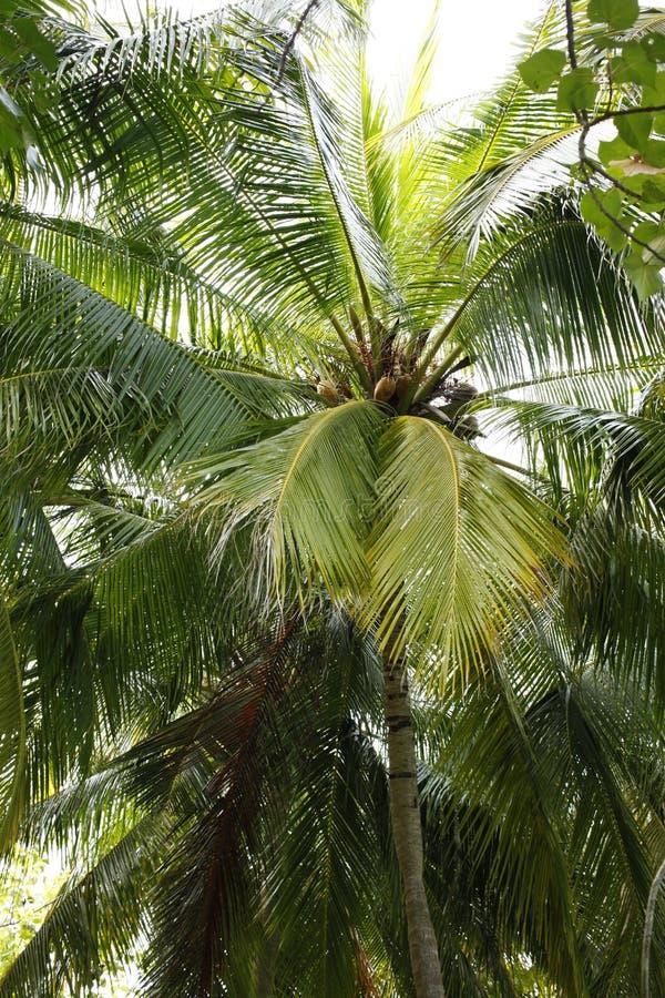 Palmeras en la isla de vacaciones de Maldivas imagenes de archivo