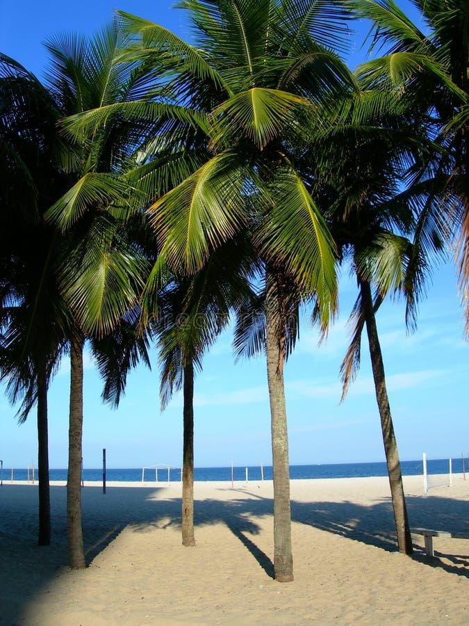 Palmeras en la playa de Copacabana imagen de archivo