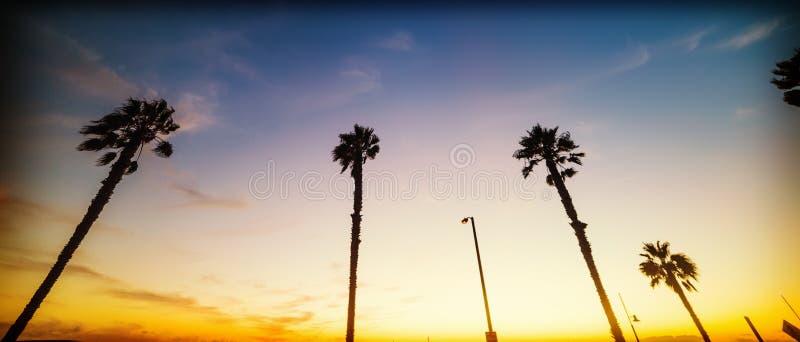 Palmeras en la playa de Santa Monica en la puesta del sol fotografía de archivo libre de regalías