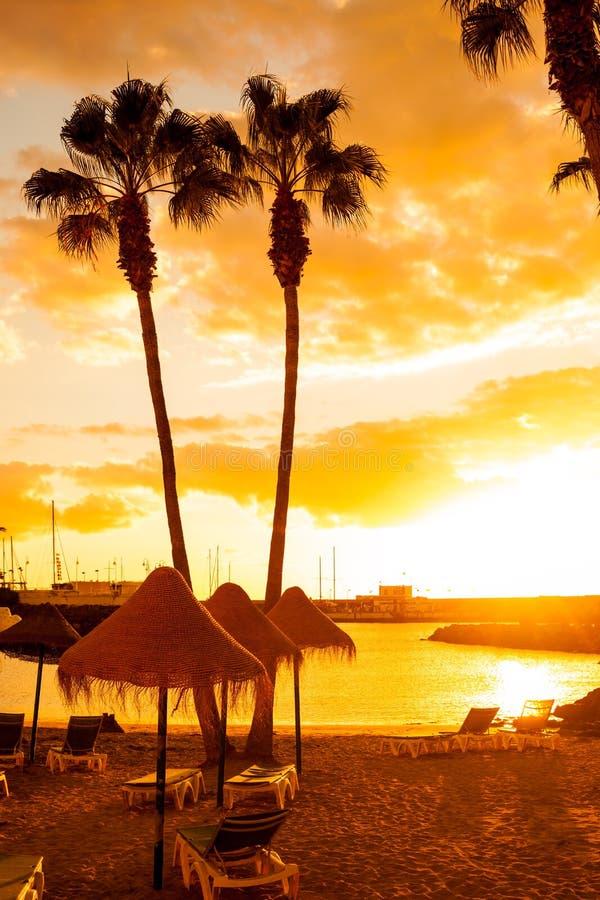 Palmeras en la playa tropical imagen de archivo