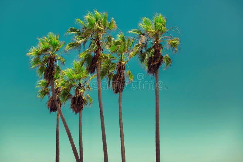 Palmeras en la playa tropical, vintage procesado imagen de archivo libre de regalías