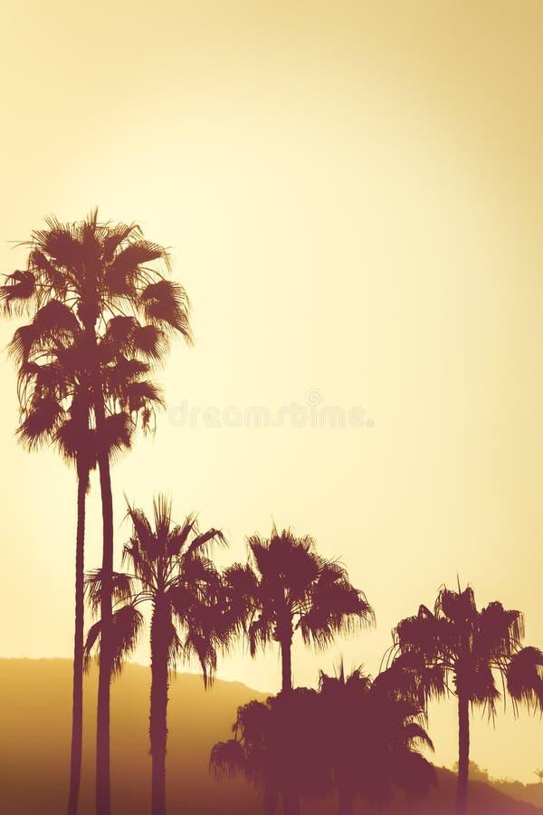 Palmeras en la puesta del sol en las colinas en la costa de California cerca de Los A imagen de archivo