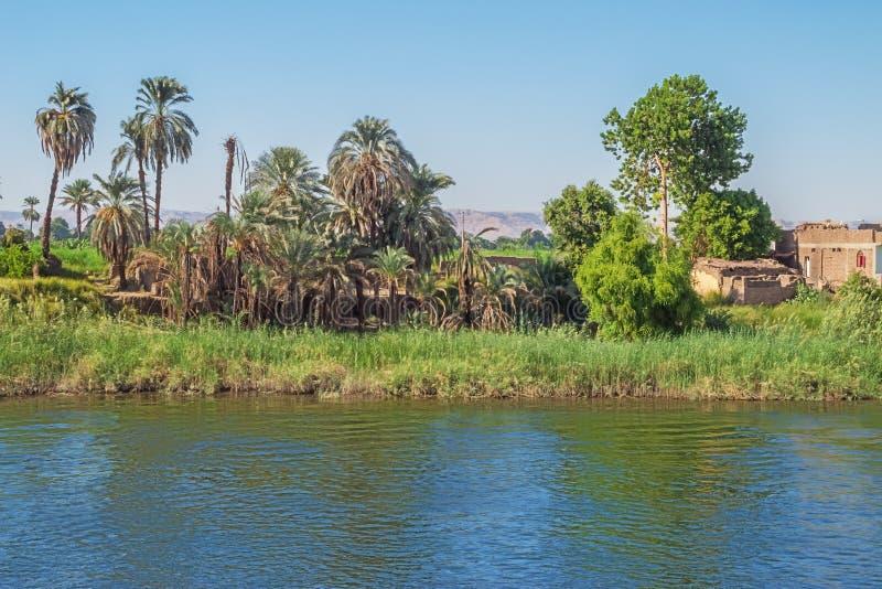 Palmeras en las orillas del Nilo imagen de archivo libre de regalías