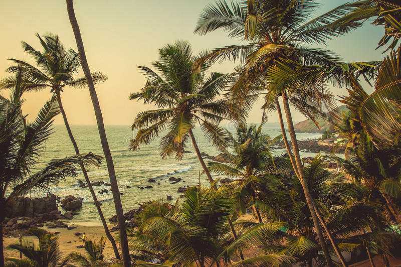 Palmeras en los rayos de la puesta del sol en la playa del fondo y foto de archivo