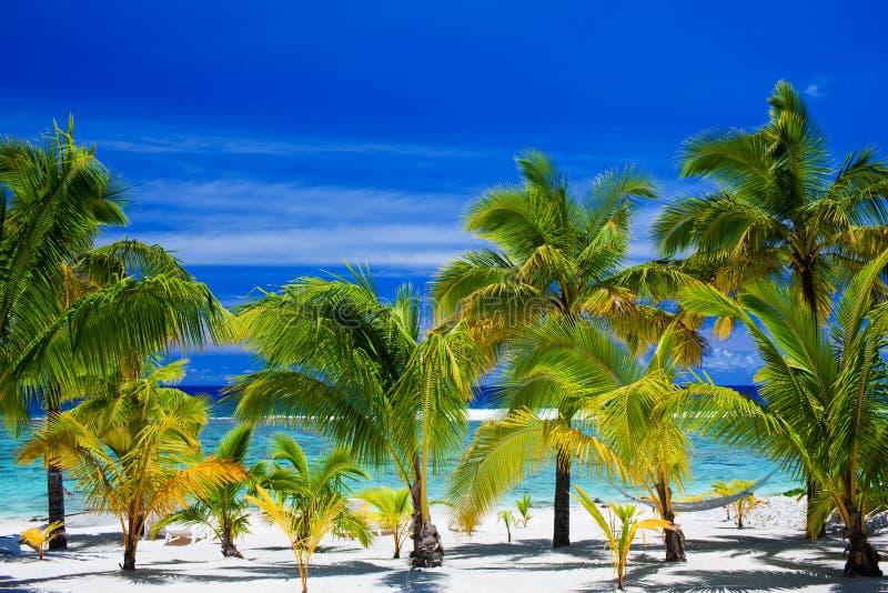 Palmeras en un frente asombroso de la playa imagen de archivo