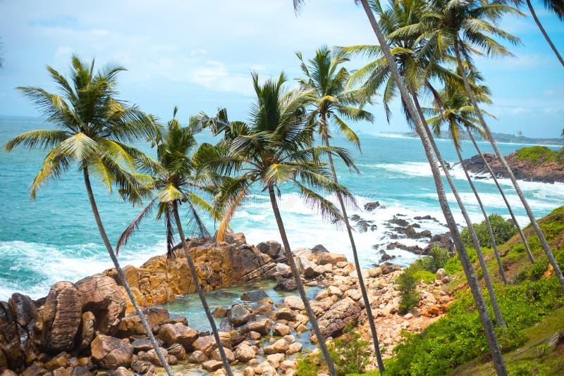 Palmeras finas largas sobre la orilla del océano paisaje colorido de Asia cielo azul de las plantas tropicales foto de archivo