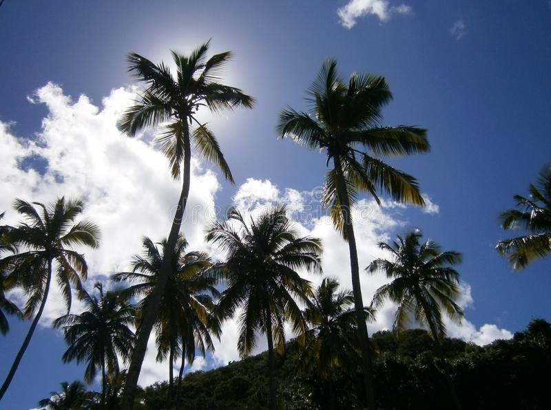 Palmeras maravillosas delante de un cielo azul fotografía de archivo