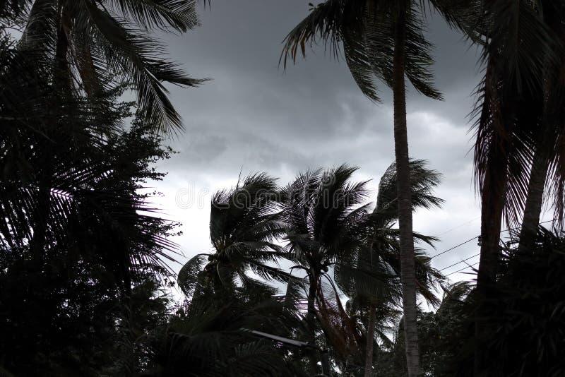 Palmeras que soplan en el viento durante huracán imagen de archivo libre de regalías